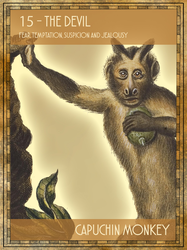 Animal Tarot Capuchin monkey