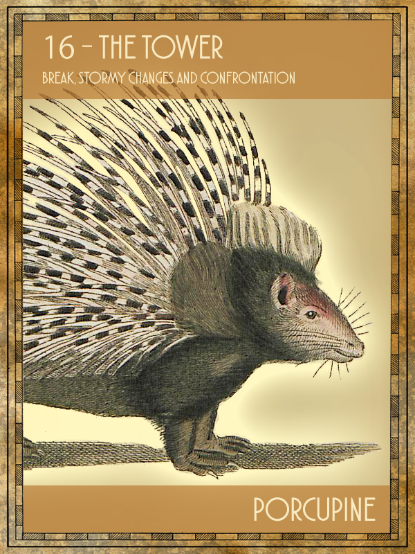 Animal Tarot Porcupine