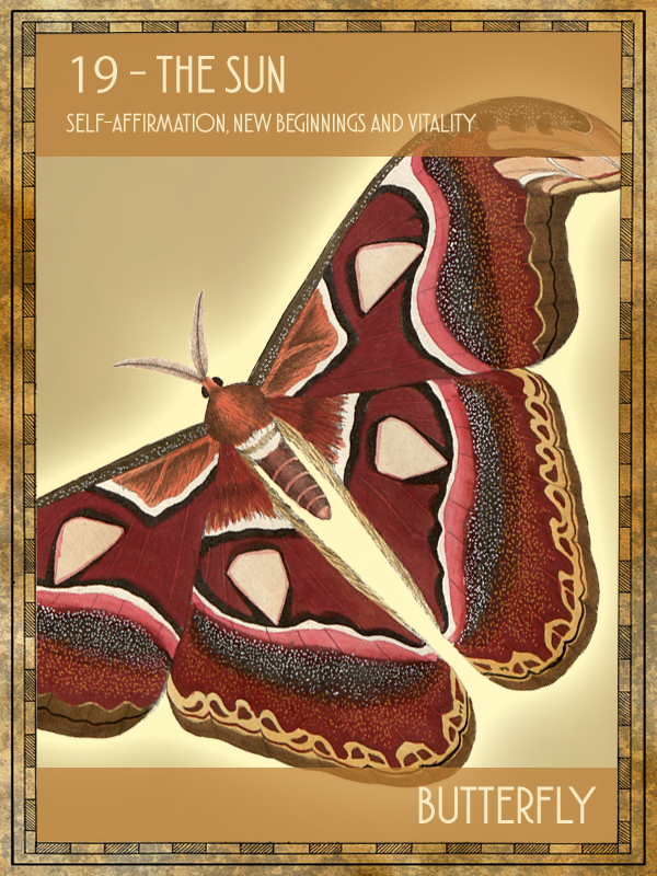 Animal Tarot Butterfly