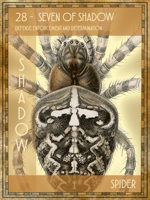 Animal Tarot Spider