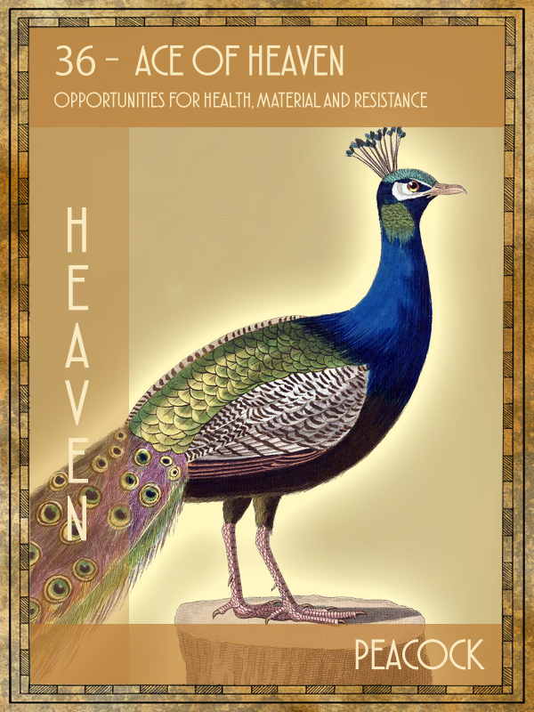 Animal Tarot Peacock