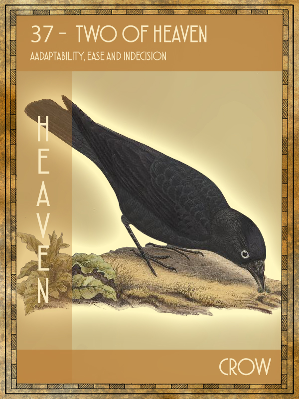 Animal Tarot Card:  Crow