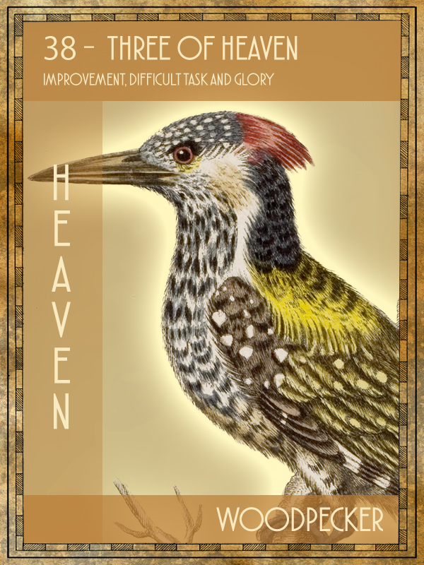 Animal Tarot Woodpecker