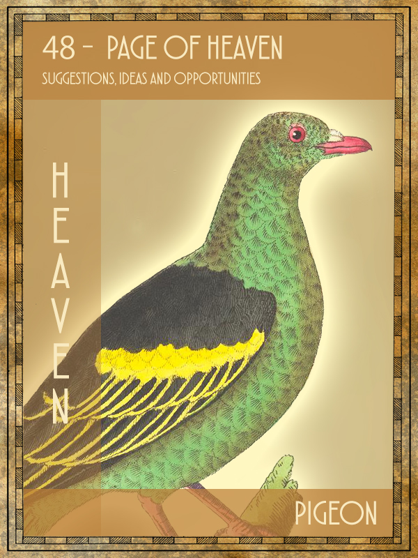 Animal Tarot Pigeon