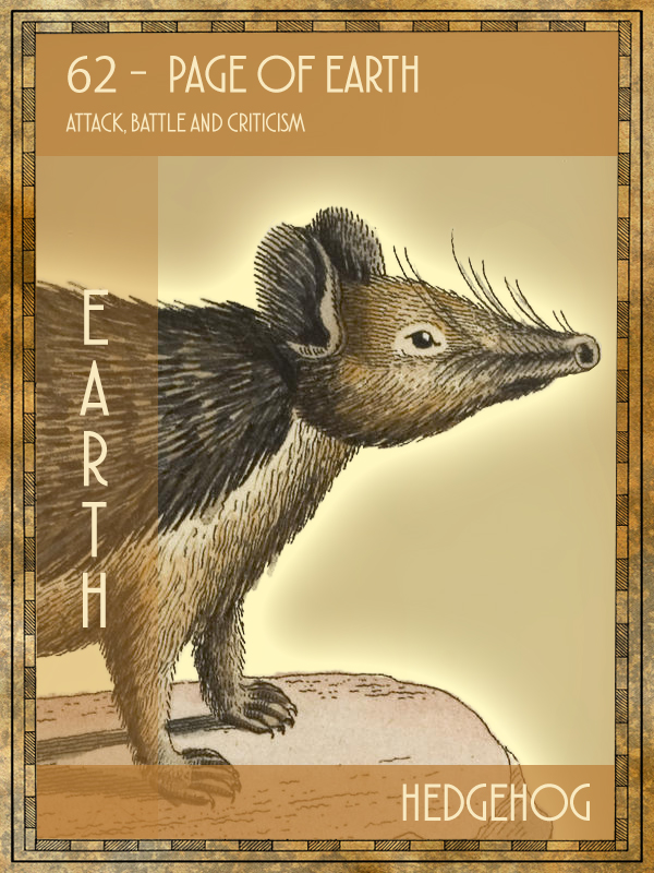 Animal Tarot Hedgehog