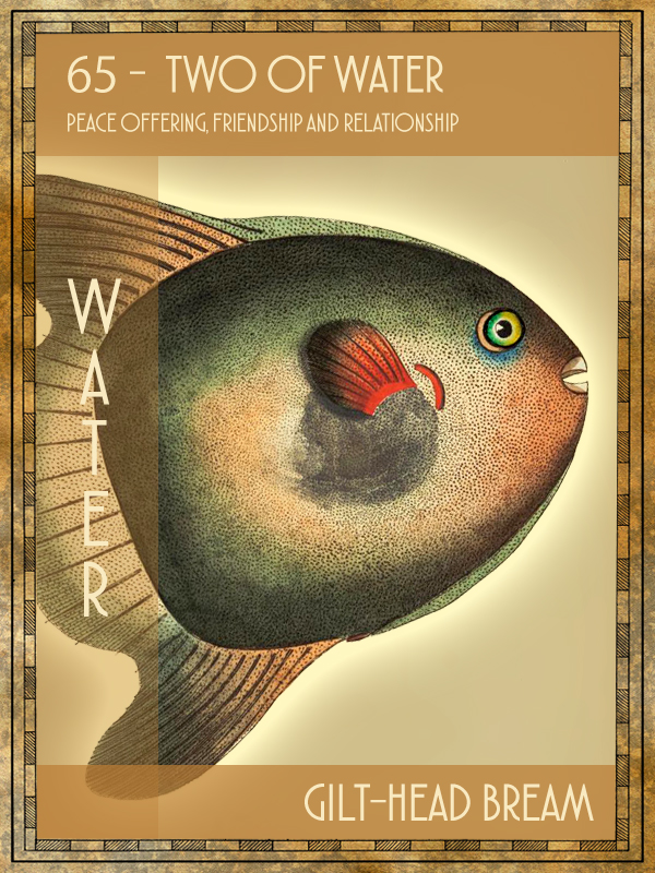 Animal Tarot Card:  Gilt-head bream