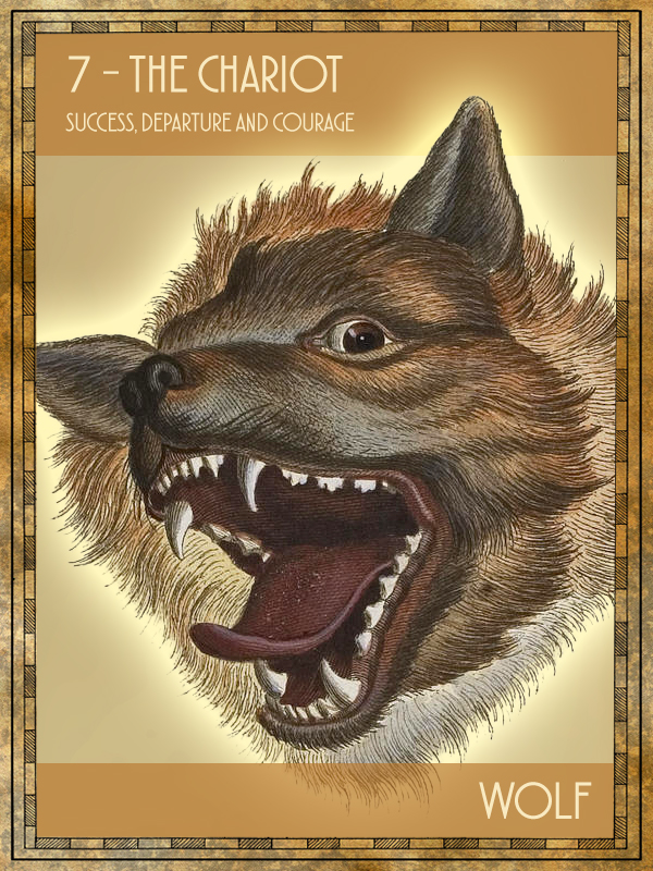 Animal Tarot Wolf