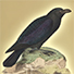 Animal Tarot Raven