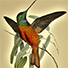 Animal Tarot Hummingbird