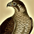 Animal Tarot Falcon